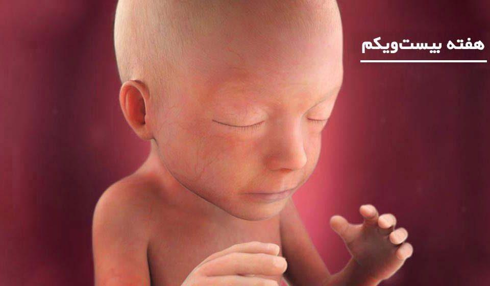 بارداری: هفته بیست و یکم - میترانیتا