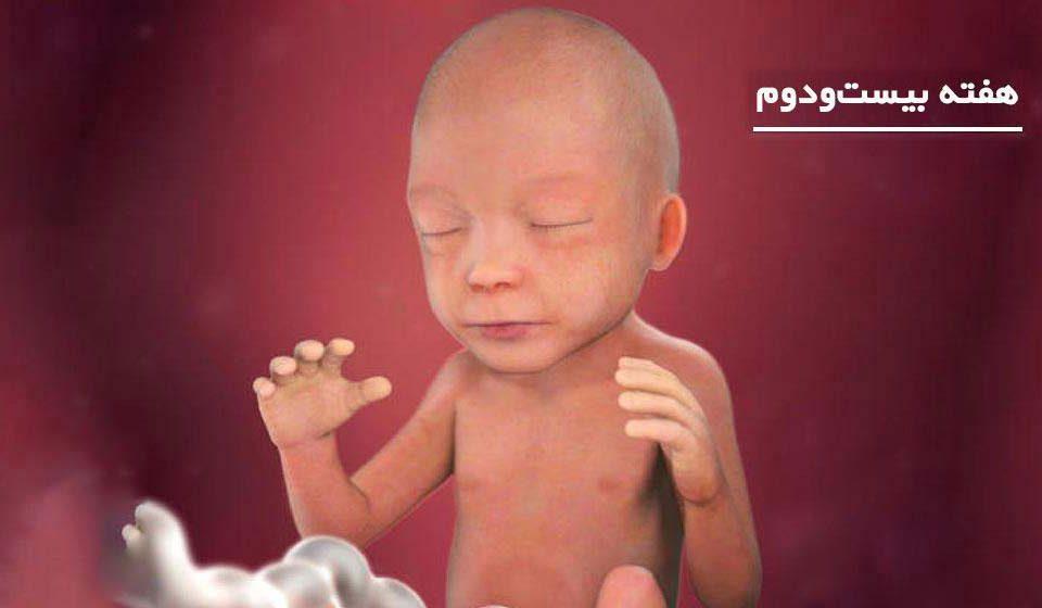 بارداری: هفته بیست و دوم - میترانیتا