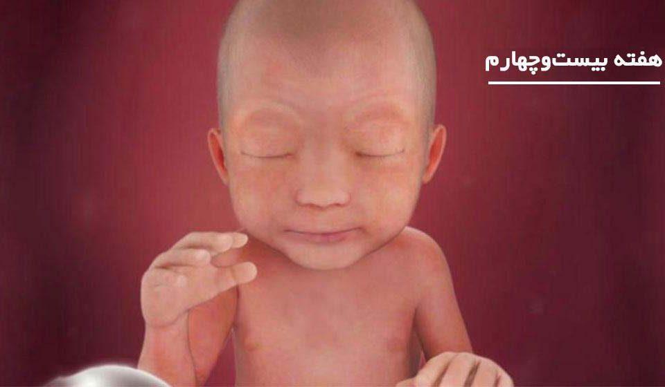 بارداری: هفته بیست و چهارم - میترانیتا