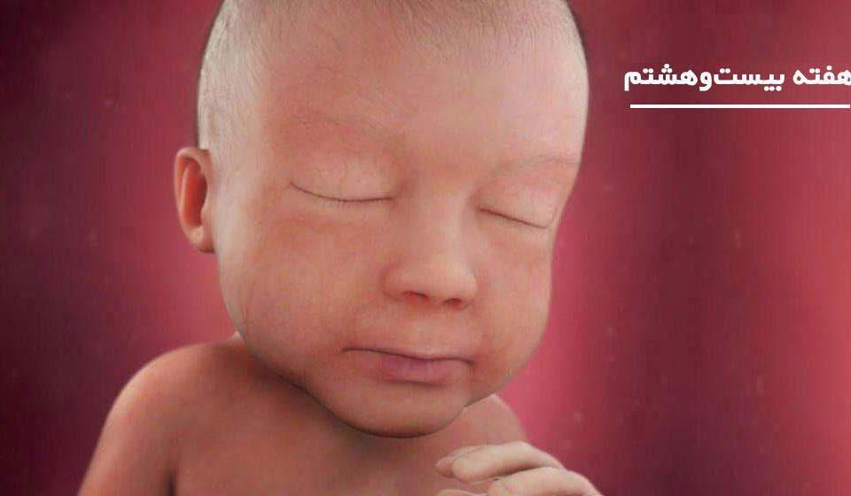 بارداری: هفته بیست و هشتم - میترانیتا