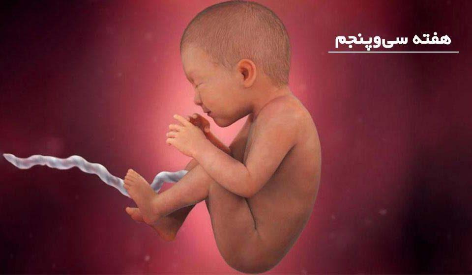 بارداری: هفته سی و پنجم - میترانیتا