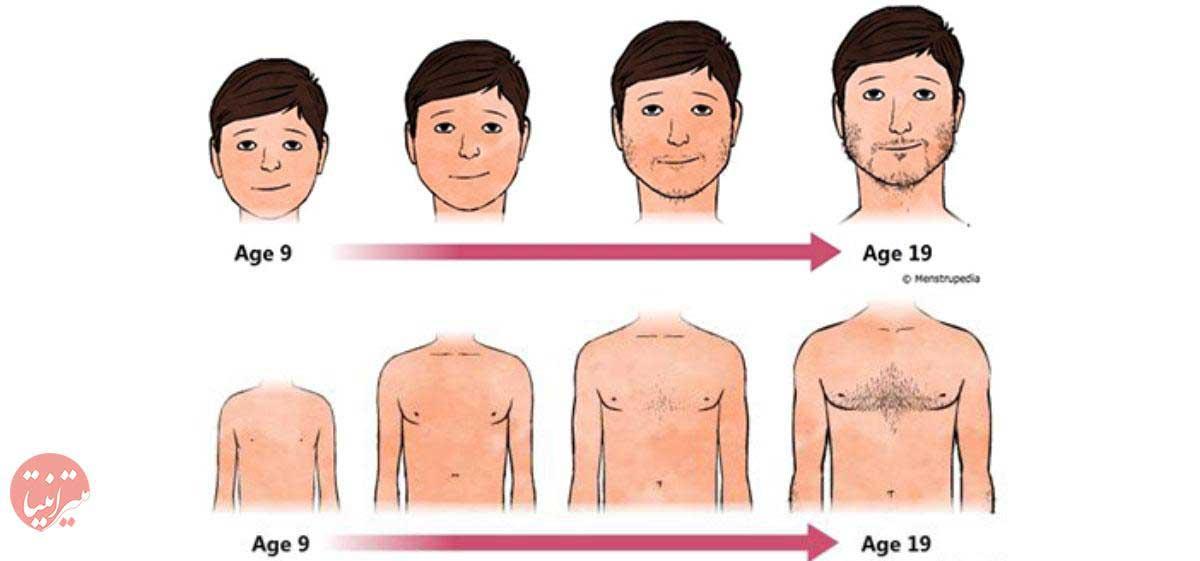 تغییرات جسمی دوران بلوغ در پسران - میترانیتا
