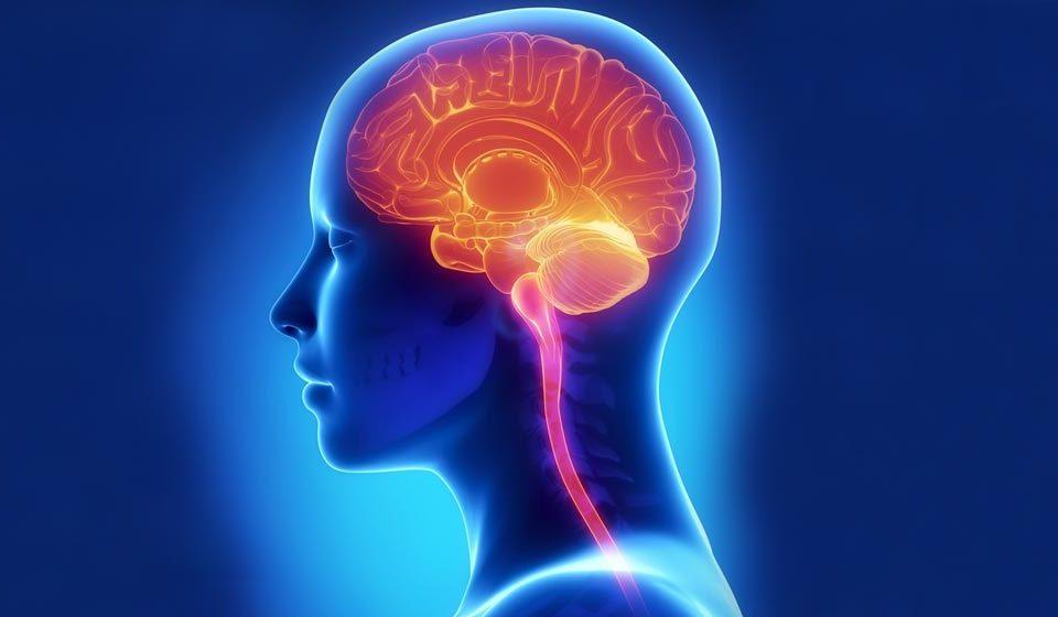 قسمتهای اصلی دستگاه عصبی - میترانیتا