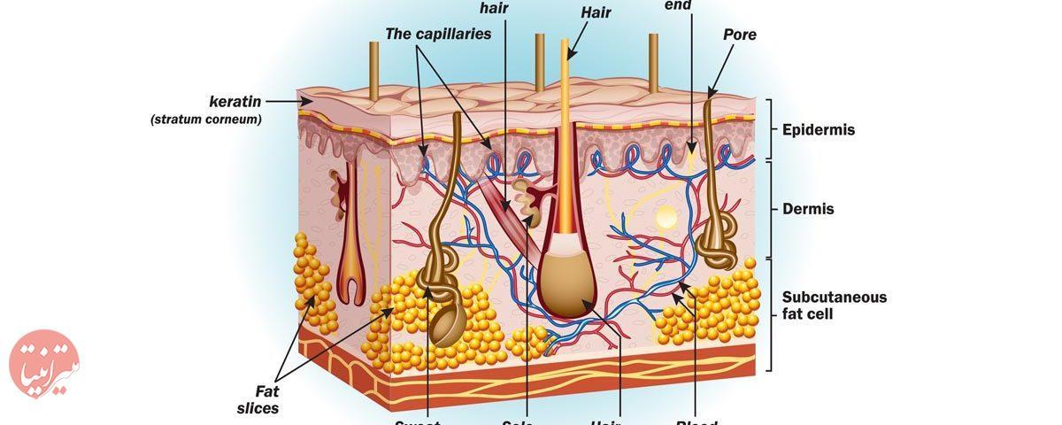 درباره پوست - میترانیتا